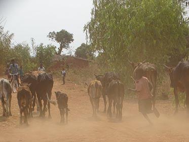 ノマド_アフリカ
